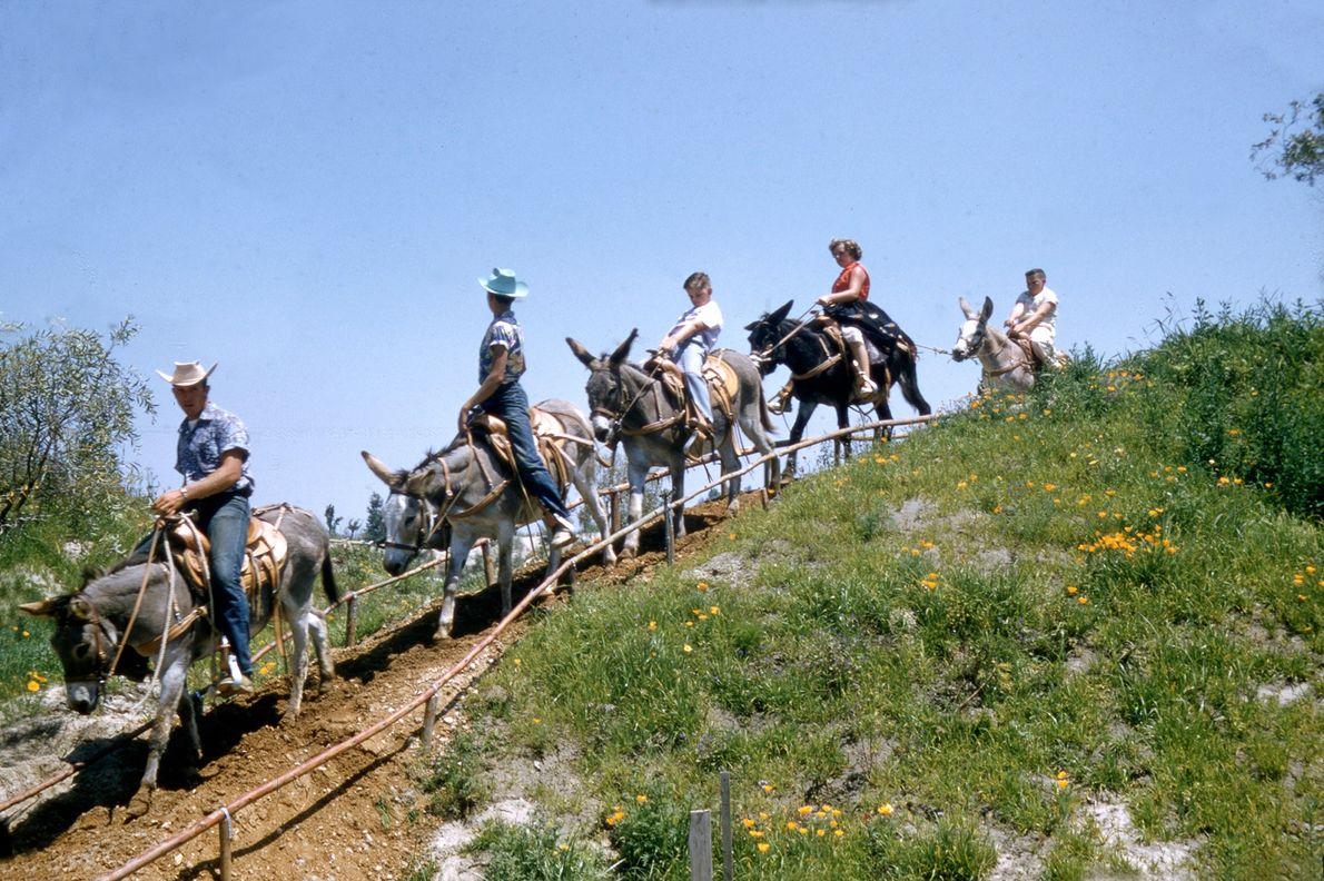 """Besucher von Frontierland reiten in der """"Painted Desert"""" auf Maultieren."""