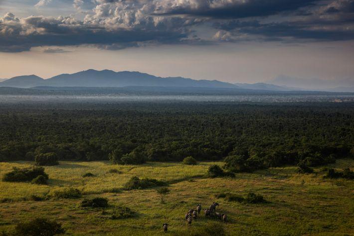 Elefanten nach Virunga