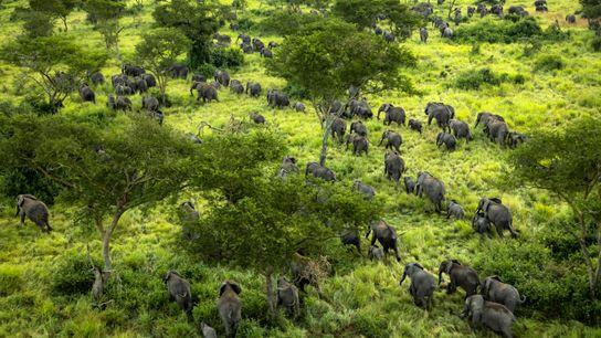 Elefanten Virunga-Nationalpark