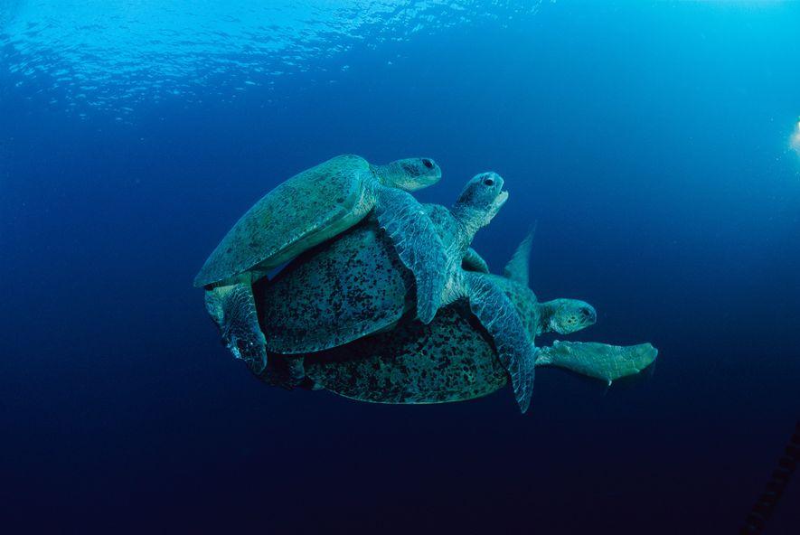 Wie funktioniert tierischer Unterwassersex?