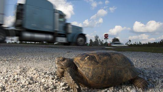 Land- oder Wasserschildkröte? Wo ist der Unterschied?