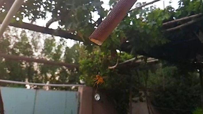 Auch Wespen brauchen Wasser. Faszinierende Slow Motion-Aufnahmen.