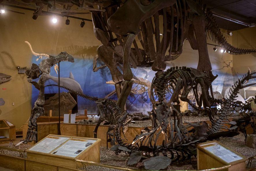 Im Vordergrund stürzt sich ein Allosaurier auf einen, am Boden liegenden Stegosaurier, wahrend im Hintergrund ein ...