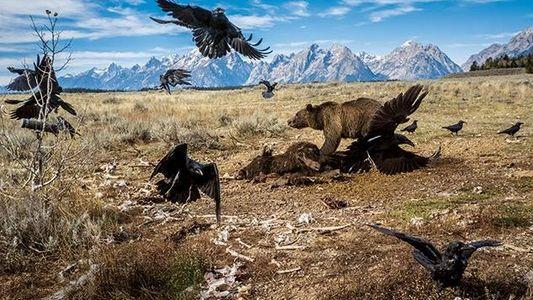 Galerie: Yellowstone: Amerikas wilde Idee