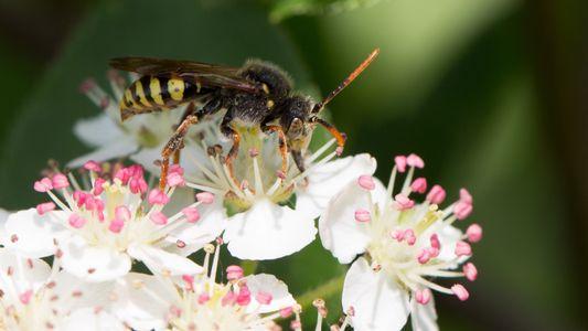 Wer rettet die Bienen?