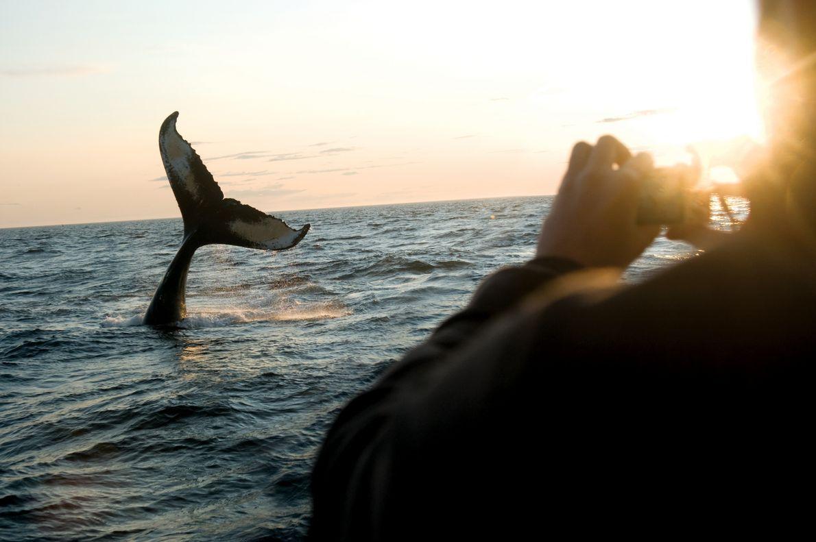 Wal im Meer