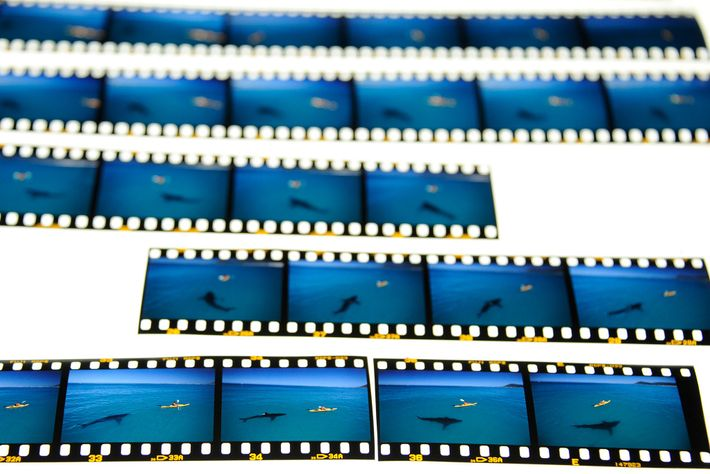 Die entwickelte Filmrolle zeigt die Momente, die schließlich zu der Aufnahme führten, die der Fotograf Thomas ...