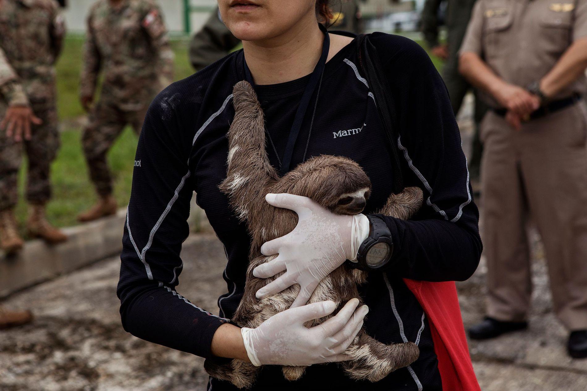 Tierärztin Violeta Barrera Navarro hält nach einer Rettungsaktion in Puerto Alegría ein Faultier im Arm.