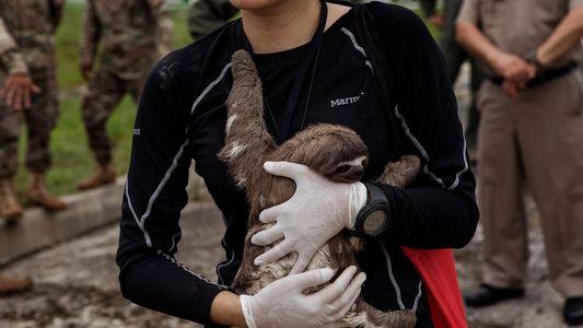 Faultiere, Seekuh und andere Wildtiere vor Leben als Touristenattraktion gerettet