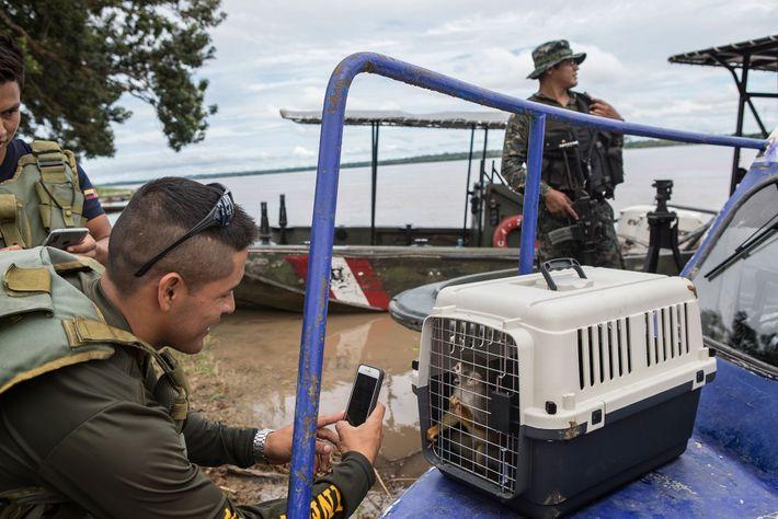 Ein Soldat der Luftwaffe macht ein Foto von einem geretteten Totenkopfäffchen. Die Bewohner von Puerto Alegría ...