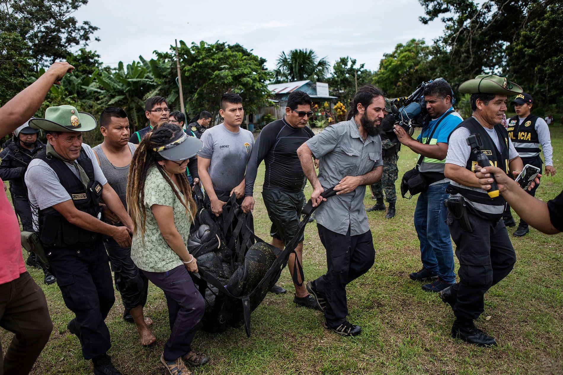 Polizisten und Tierärzte schleppen ein Manati zum wartenden Boot. Das Manati wurde in einem Teich gehalten, ...