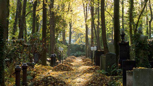 Auf einem verwilderten Friedhof in Berlin tobt das Leben