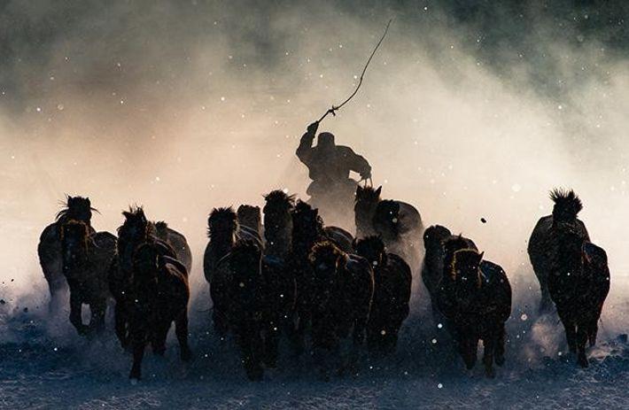 """Winter Horseman"""
