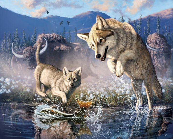 Diese Illustration zeigt einen Wolf bei der Jagd mit seinem Jungtier im nordwestlichen Kanada vor knapp ...