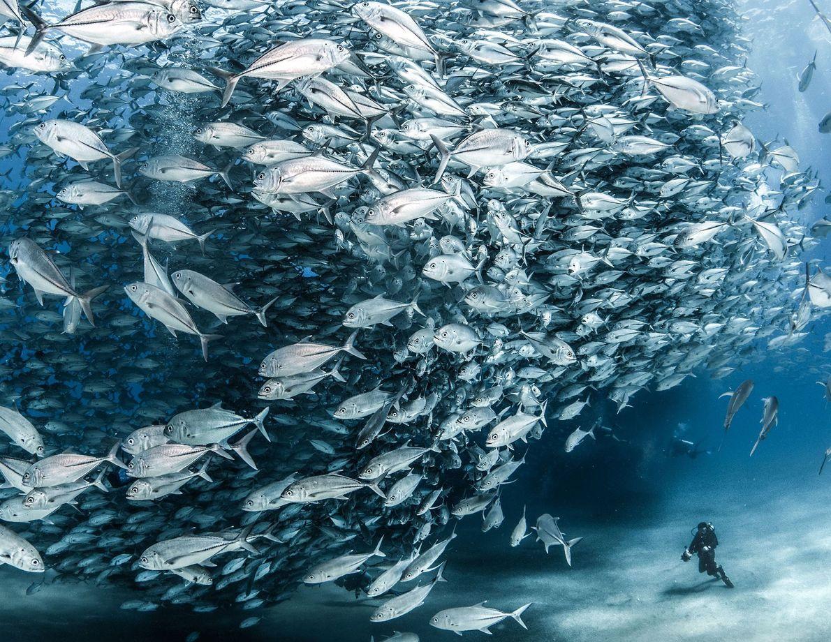 Baja California Surs Cabo Pulmo Marine Park