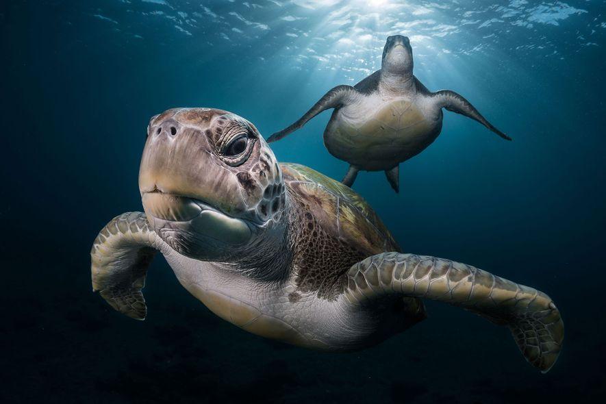 """Unter Wasser: 25 """"Postkarten aus einer fremden Welt"""""""