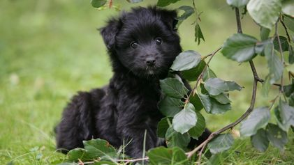 """Das Leid der """"Wühltischwelpen"""": Hunde-Boom mit fatalen Folgen"""