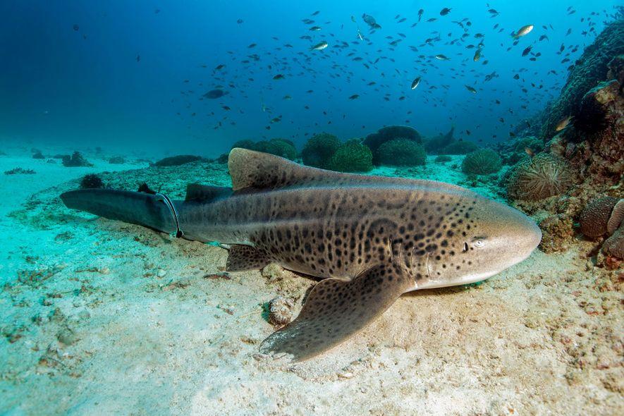 Galerie: Räuber der Meere: Fantastische Bilder von Haien