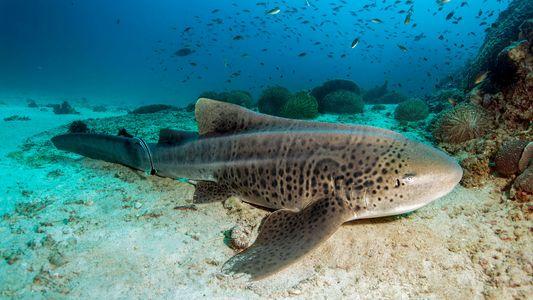 6 Haie, die ihr (vielleicht) noch nicht kennt