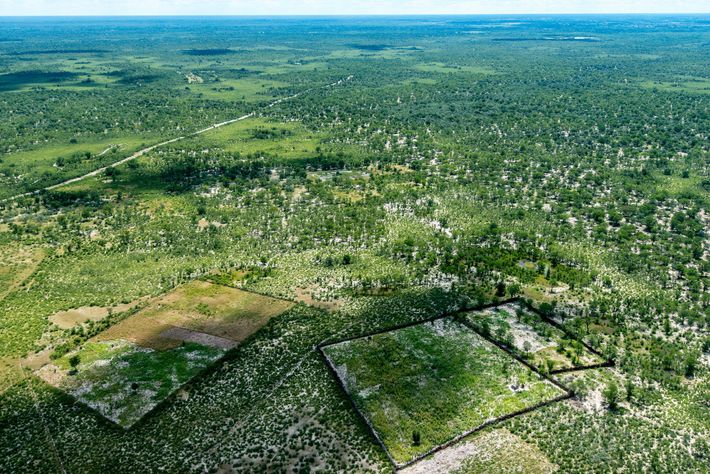 Zäune unterteilen Ackerland in Maun, Botswana. Solche Barrieren wurden in weiten Teilen Botswanas errichtet, um das ...