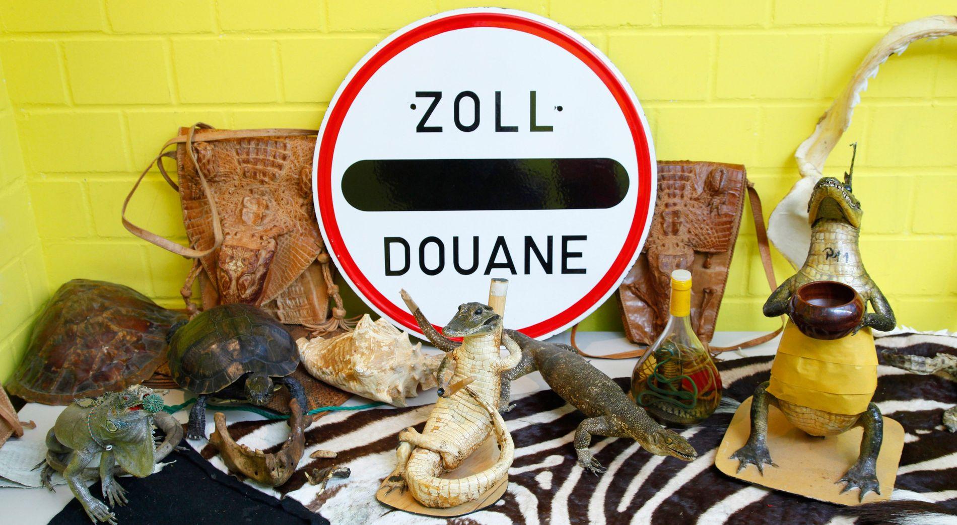 Felle, Knochen und ausgestopfte Tiere: In einer Halle sammelt der Hauptzoll am Frankfurter Flughafen Artefakte, die ...