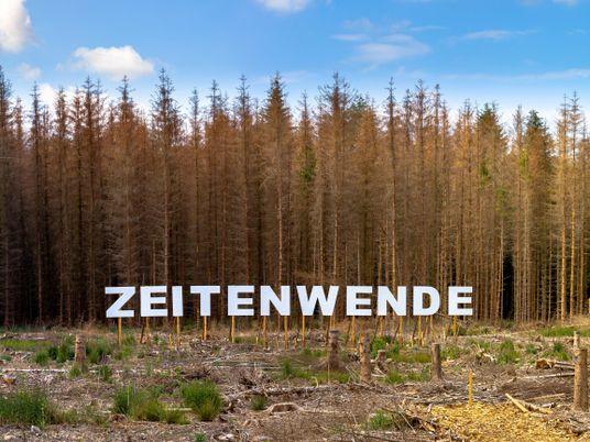 Wie wir den Wald retten