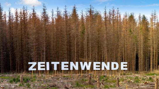 Zeitenwende im Bonner Kottenforst: Wo einst Monokulturen aus Fichten standen, sollen artenreiche Mischwälder wachsen.